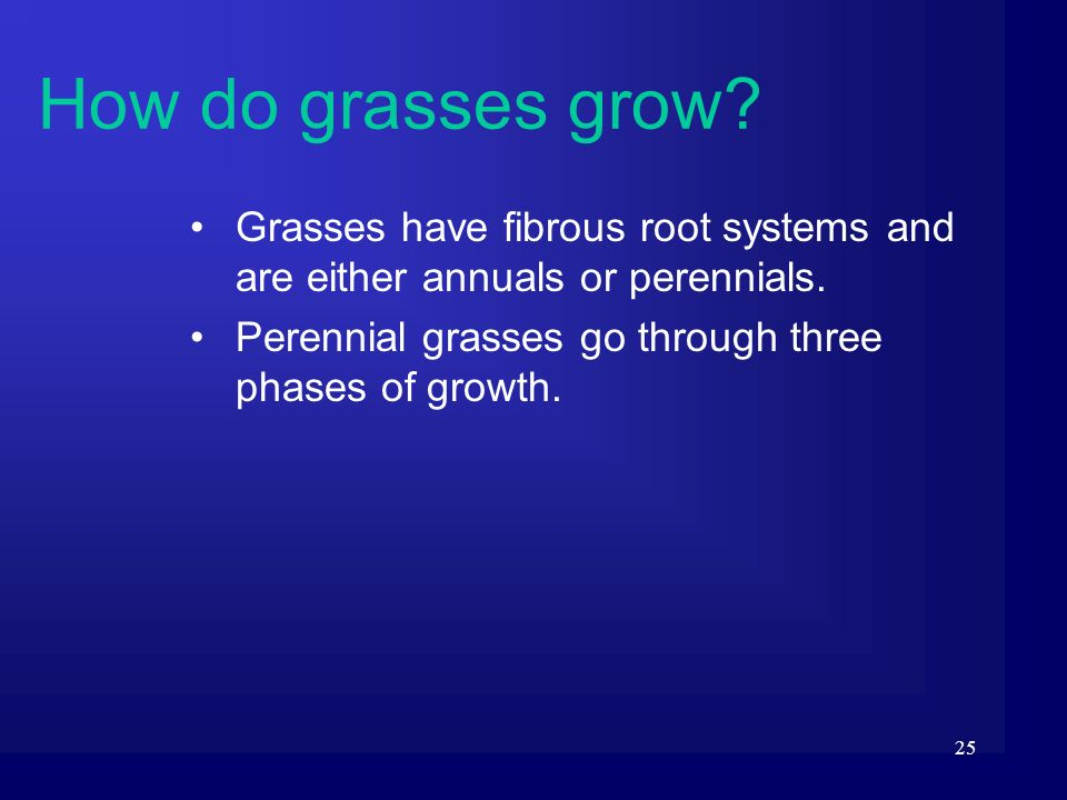 25 Grasses have fibrous root systems and are either annuals or perennials. Perennial grasses go through three phases of growth. How do grasses grow?