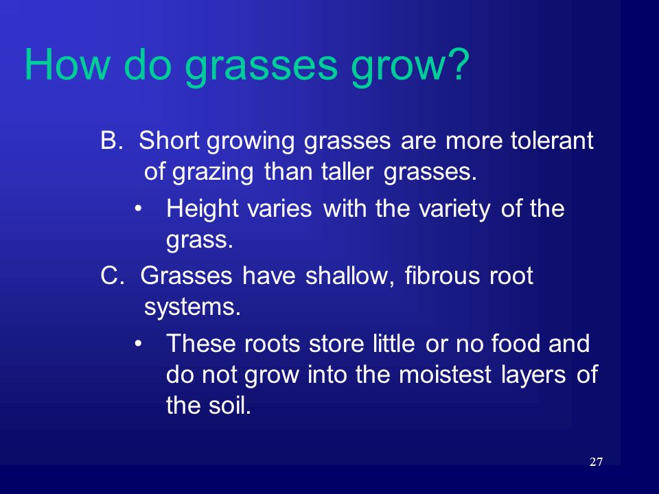 27 B. Short growing grasses are more tolerant of grazing than taller grasses. Height varies with the variety of the grass. C. Grasses have shallow, fi