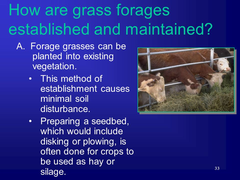 33 A. Forage grasses can be planted into existing vegetation. This method of establishment causes minimal soil disturbance. Preparing a seedbed, which