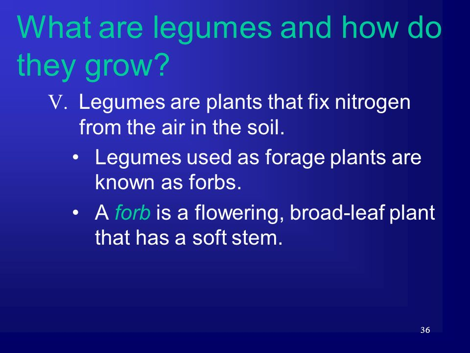 36 V. Legumes are plants that fix nitrogen from the air in the soil. Legumes used as forage plants are known as forbs. A forb is a flowering, broad-le