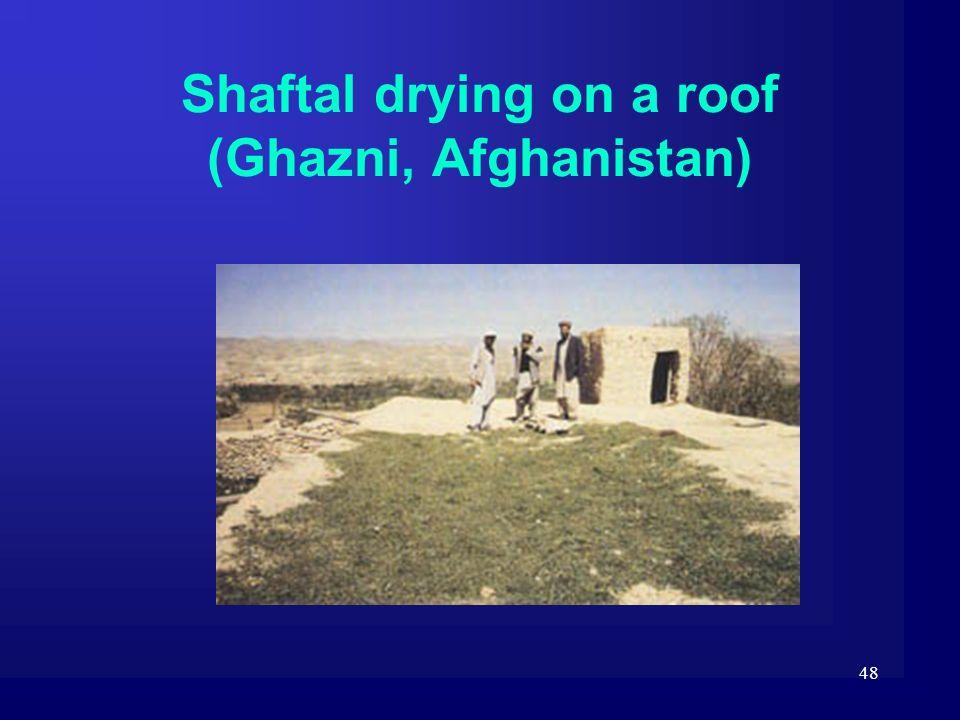 48 Shaftal drying on a roof (Ghazni, Afghanistan)