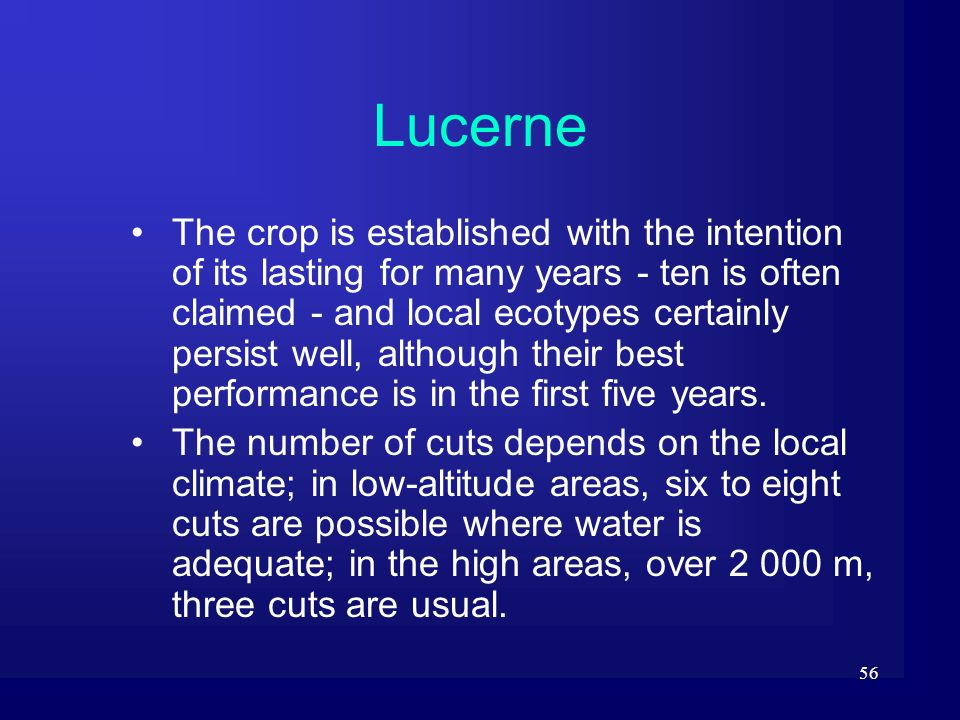 56 Lucerne The crop is established with the intention of its lasting for many years - ten is often claimed - and local ecotypes certainly persist well