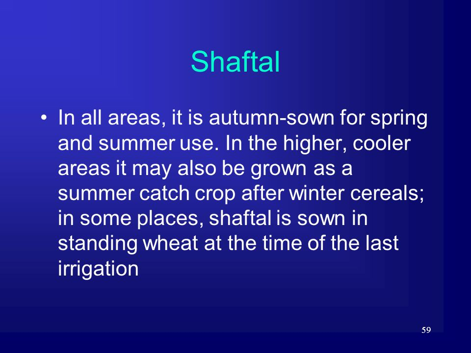 59 Shaftal In all areas, it is autumn-sown for spring and summer use. In the higher, cooler areas it may also be grown as a summer catch crop after wi