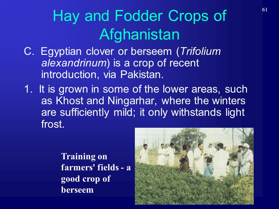 61 Hay and Fodder Crops of Afghanistan C. Egyptian clover or berseem (Trifolium alexandrinum) is a crop of recent introduction, via Pakistan. 1. It is