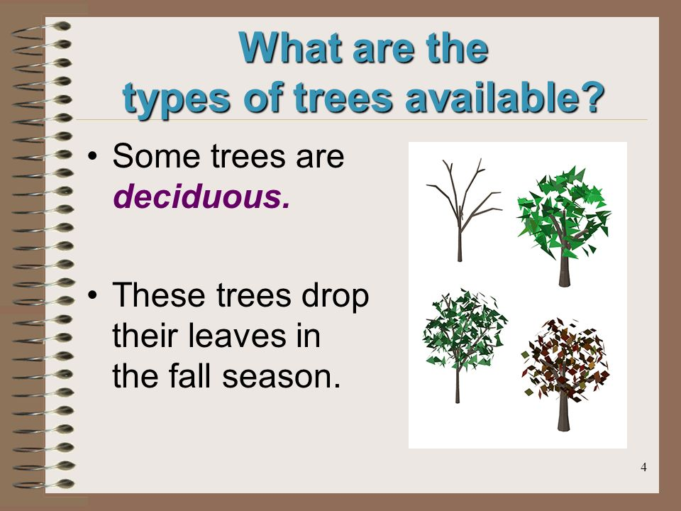 4 What are the types of trees available.Some trees are deciduous.