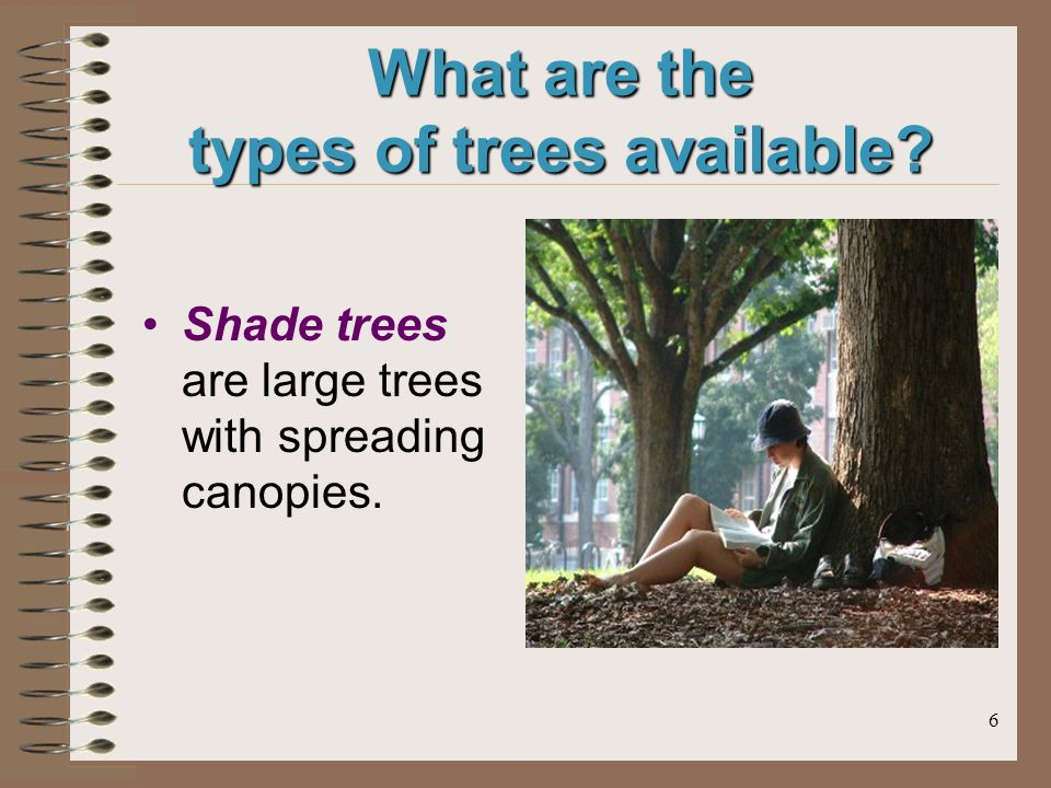6 What are the types of trees available Shade trees are large trees with spreading canopies.