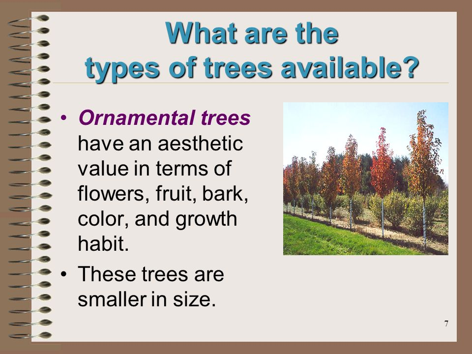 7 What are the types of trees available.