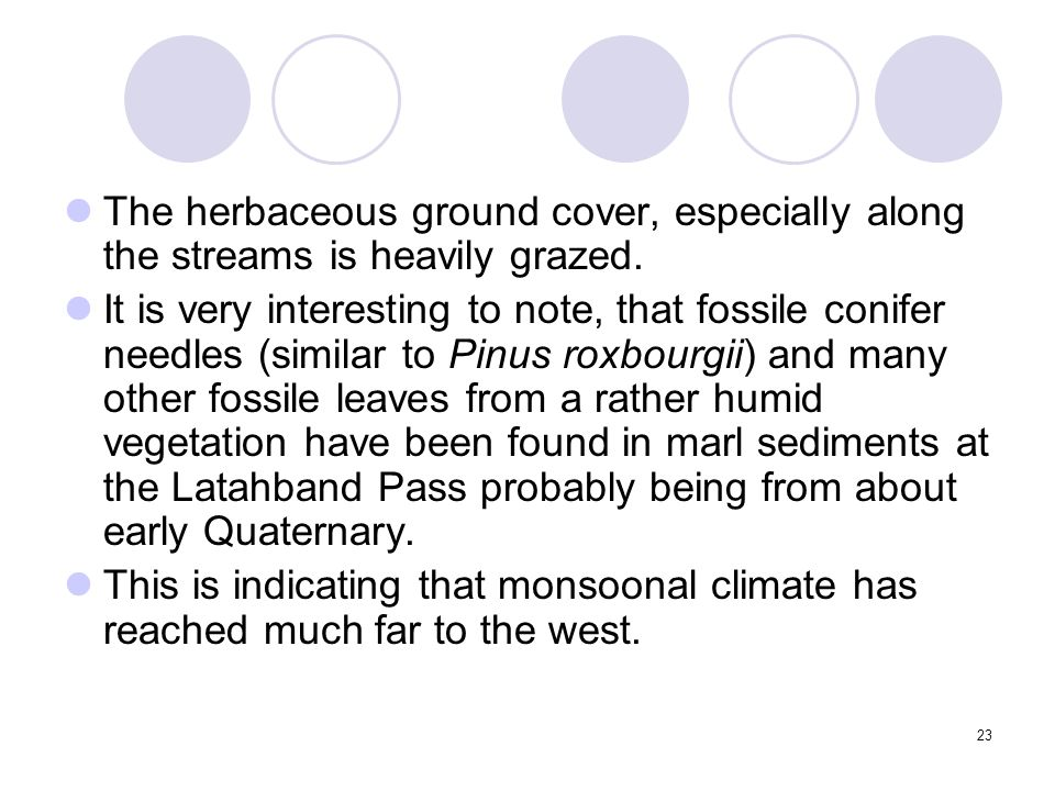 23 The herbaceous ground cover, especially along the streams is heavily grazed. It is very interesting to note, that fossile conifer needles (similar