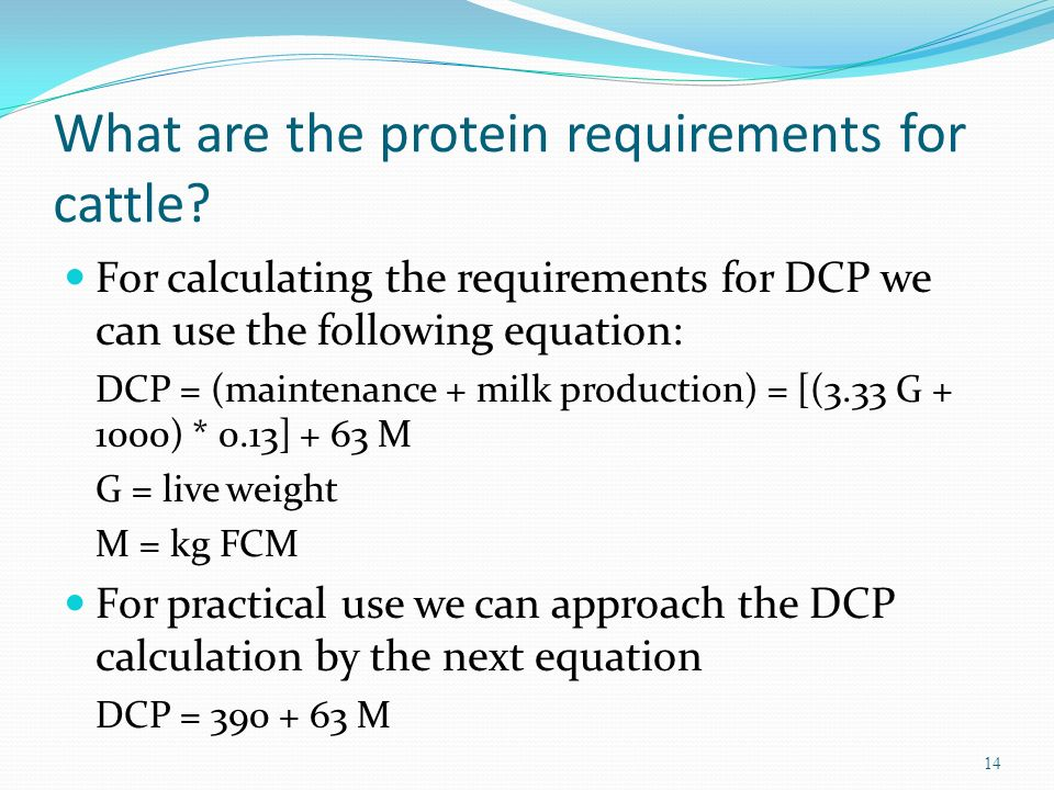 What are the protein requirements for cattle? For calculating the requirements for DCP we can use the following equation: DCP = (maintenance + milk pr