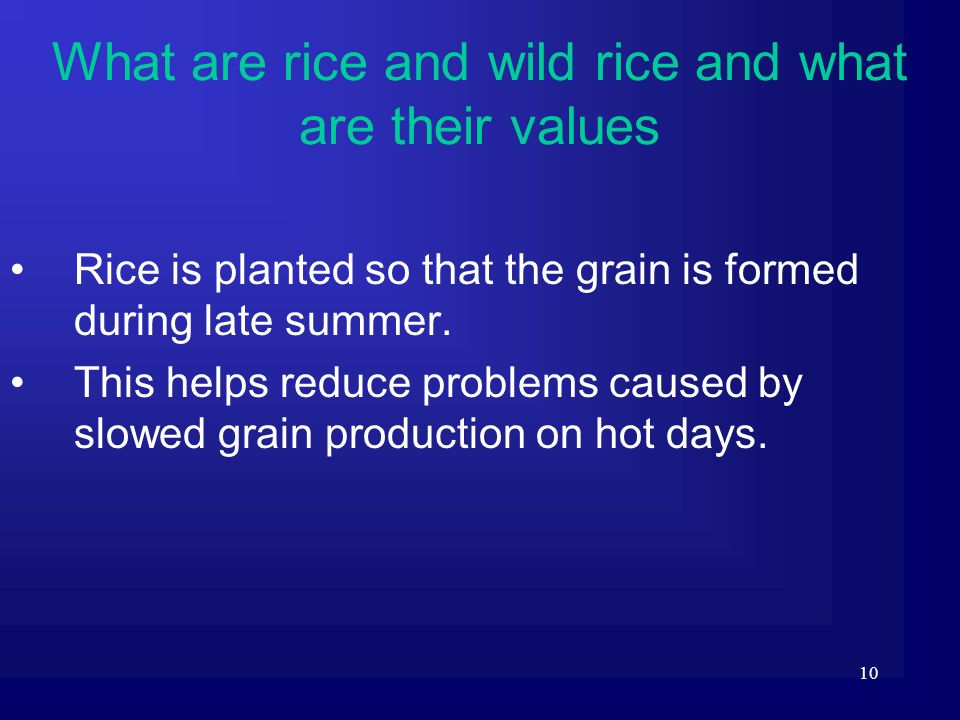 10 Rice is planted so that the grain is formed during late summer. This helps reduce problems caused by slowed grain production on hot days. What are