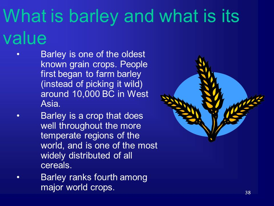 38 Barley is one of the oldest known grain crops. People first began to farm barley (instead of picking it wild) around 10,000 BC in West Asia. Barley