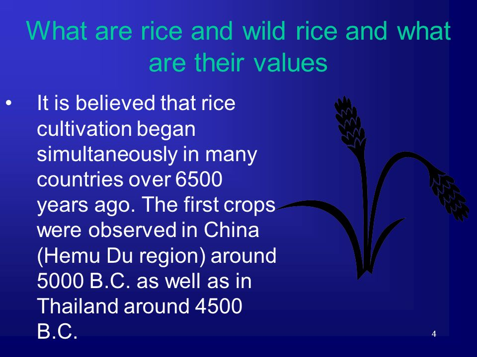 4 It is believed that rice cultivation began simultaneously in many countries over 6500 years ago. The first crops were observed in China (Hemu Du reg