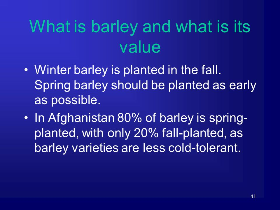 41 What is barley and what is its value Winter barley is planted in the fall. Spring barley should be planted as early as possible. In Afghanistan 80%