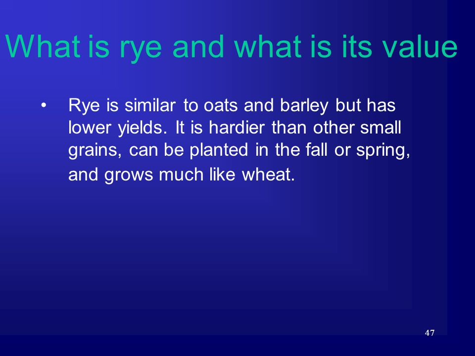 47 Rye is similar to oats and barley but has lower yields. It is hardier than other small grains, can be planted in the fall or spring, and grows much
