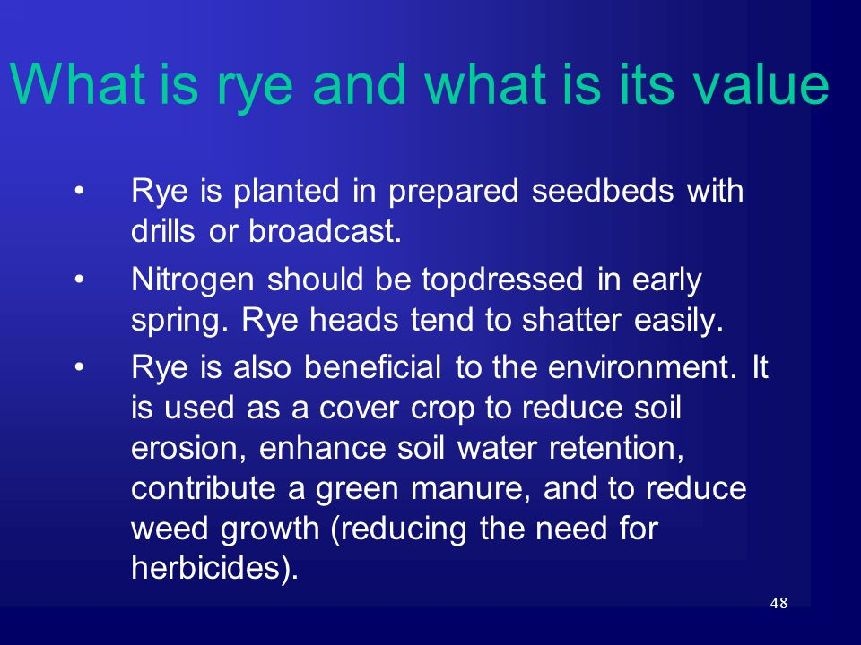 48 Rye is planted in prepared seedbeds with drills or broadcast. Nitrogen should be topdressed in early spring. Rye heads tend to shatter easily. Rye
