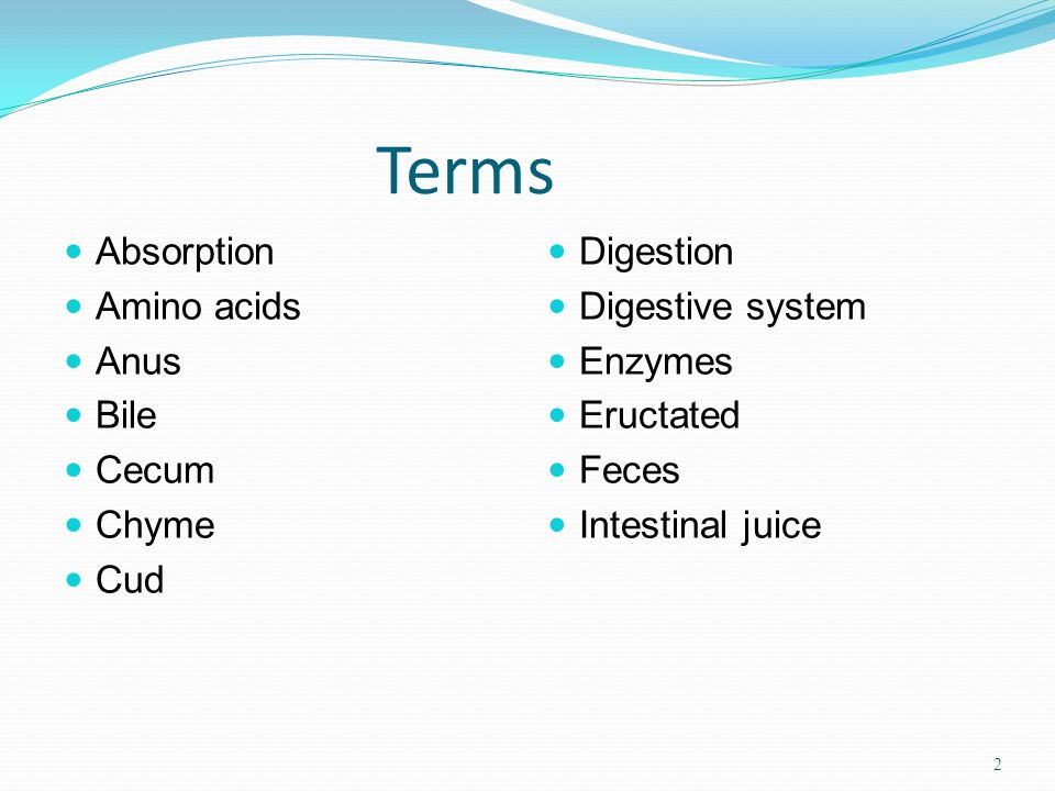 Terms Absorption Amino acids Anus Bile Cecum Chyme Cud Digestion Digestive system Enzymes Eructated Feces Intestinal juice 2