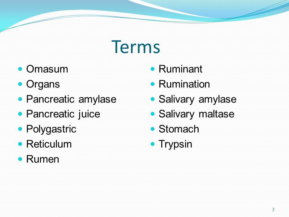 Terms Omasum Organs Pancreatic amylase Pancreatic juice Polygastric Reticulum Rumen Ruminant Rumination Salivary amylase Salivary maltase Stomach Trypsin 3