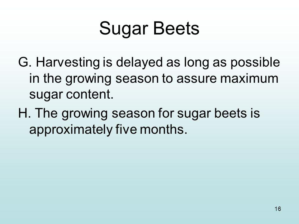 16 Sugar Beets G. Harvesting is delayed as long as possible in the growing season to assure maximum sugar content. H. The growing season for sugar bee