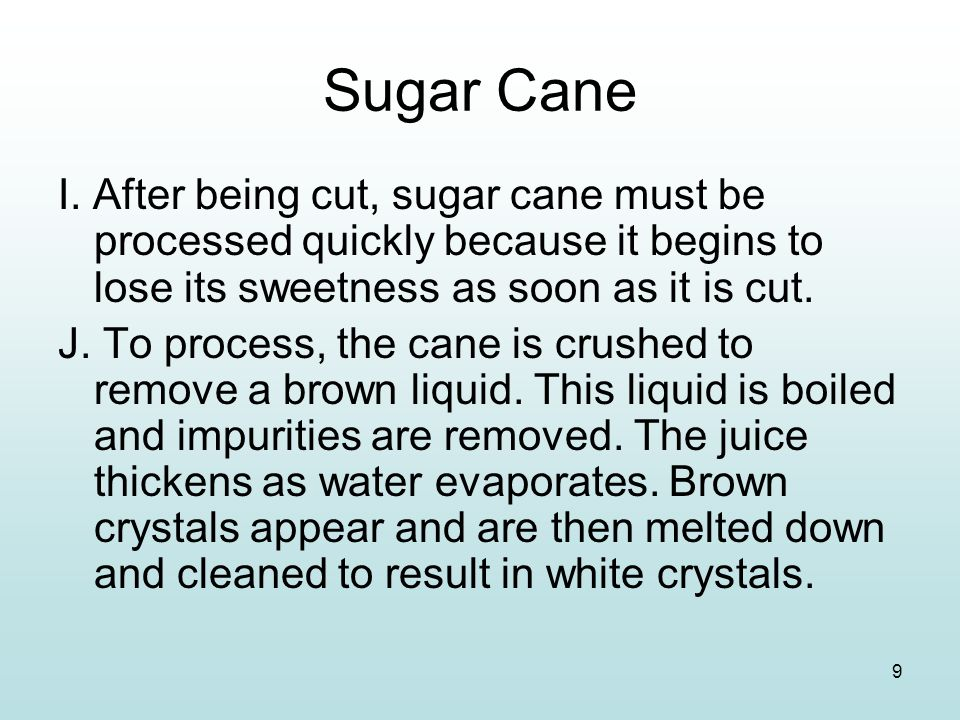 9 Sugar Cane I. After being cut, sugar cane must be processed quickly because it begins to lose its sweetness as soon as it is cut. J. To process, the