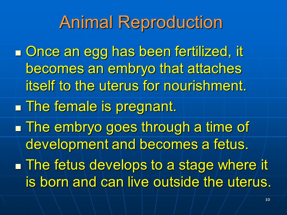 10 Animal Reproduction Once an egg has been fertilized, it becomes an embryo that attaches itself to the uterus for nourishment. Once an egg has been
