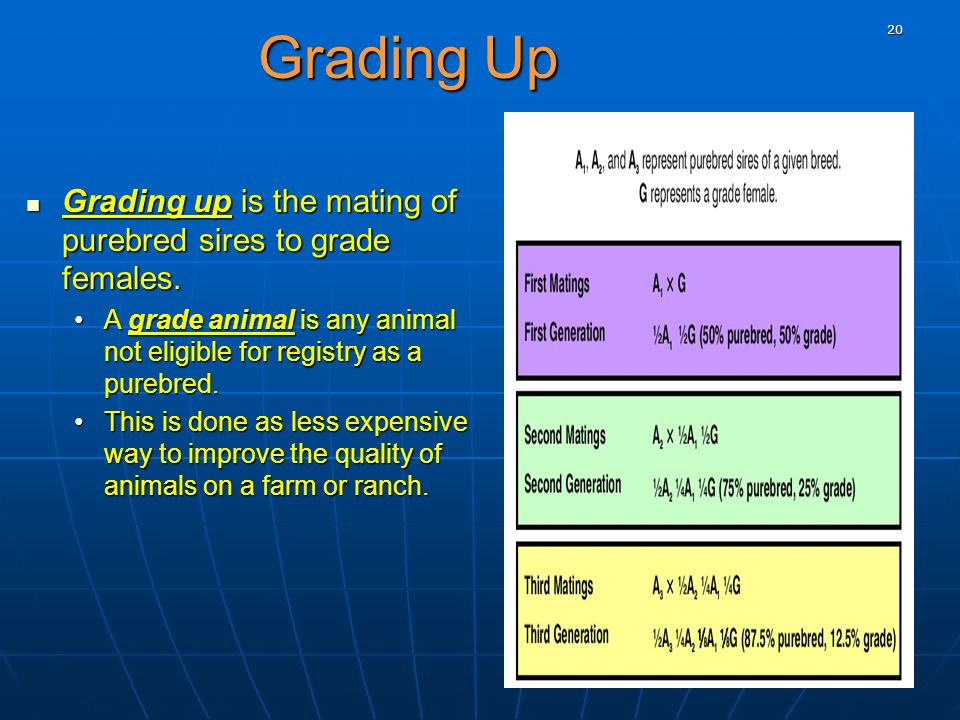 20 Grading Up Grading up is the mating of purebred sires to grade females. Grading up is the mating of purebred sires to grade females. A grade animal