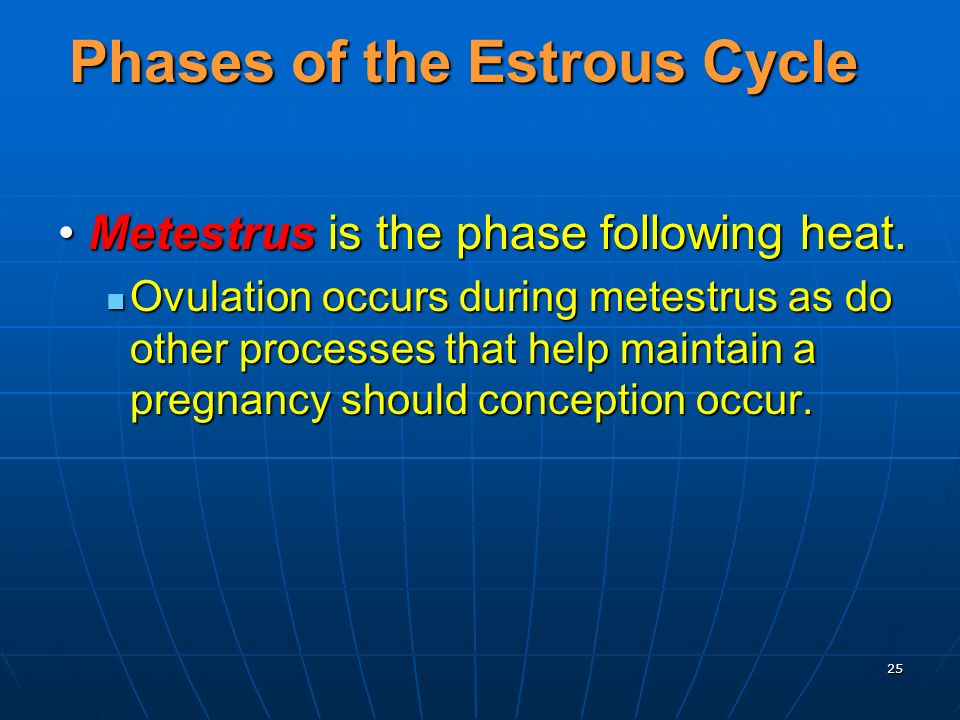 25 Phases of the Estrous Cycle Metestrus is the phase following heat.Metestrus is the phase following heat.