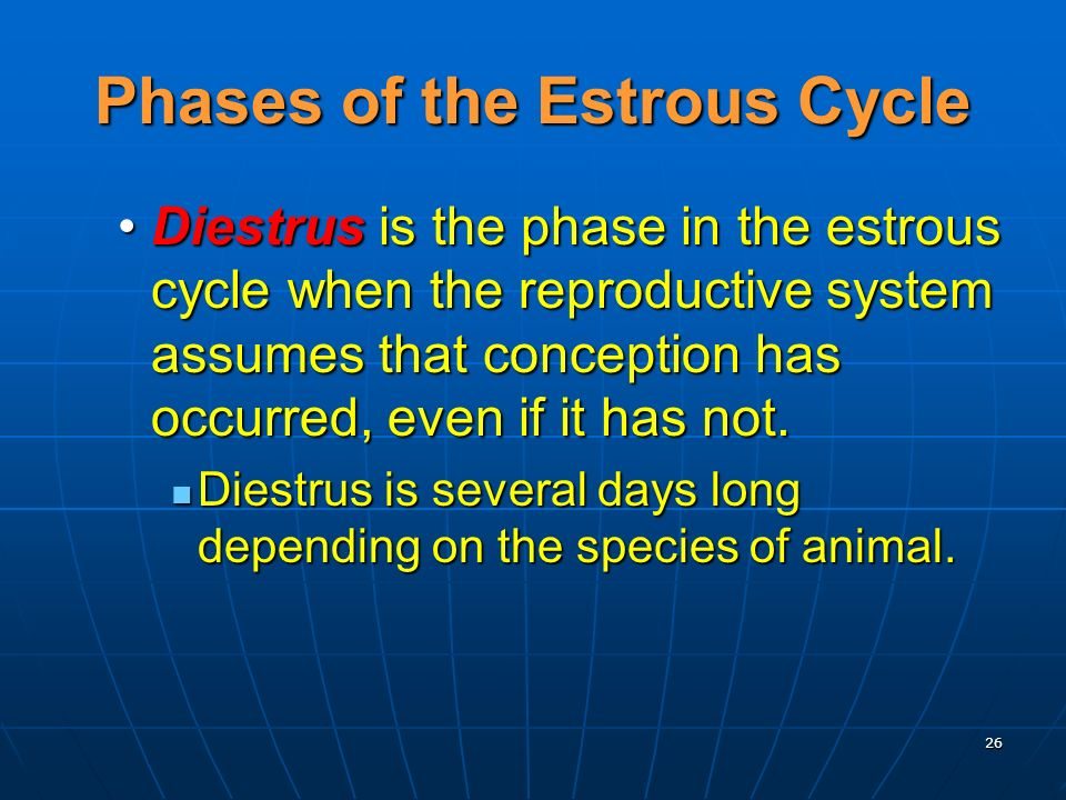 26 Diestrus is the phase in the estrous cycle when the reproductive system assumes that conception has occurred, even if it has not.Diestrus is the phase in the estrous cycle when the reproductive system assumes that conception has occurred, even if it has not.