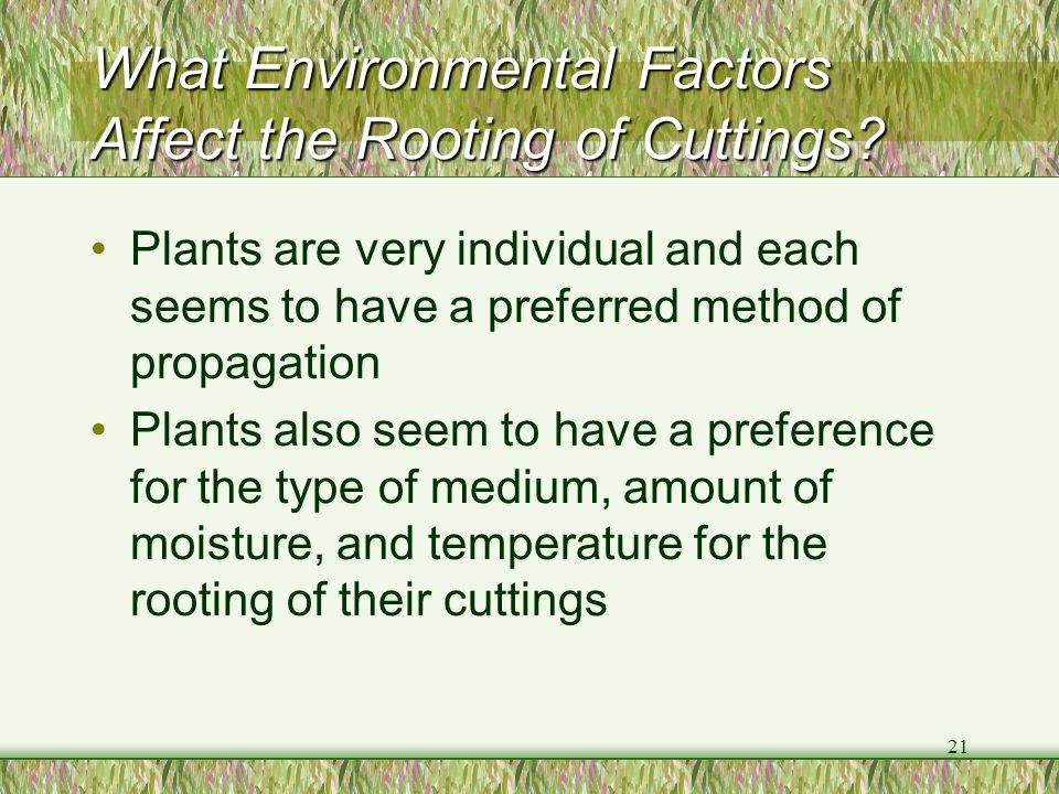 21 What Environmental Factors Affect the Rooting of Cuttings? Plants are very individual and each seems to have a preferred method of propagation Plan