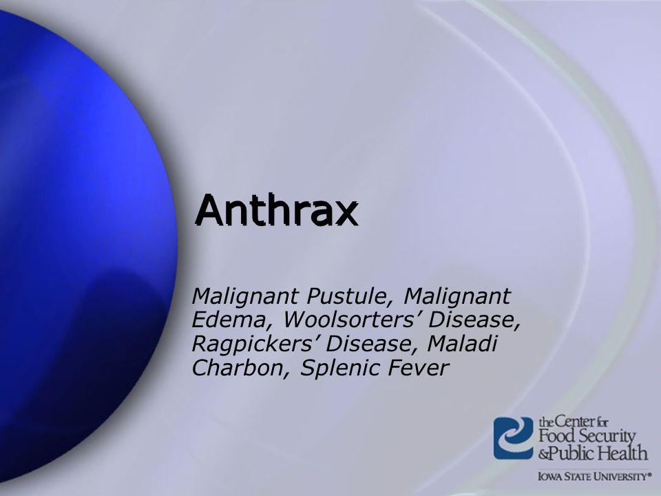 Anthrax Malignant Pustule, Malignant Edema, Woolsorters Disease, Ragpickers Disease, Maladi Charbon, Splenic Fever
