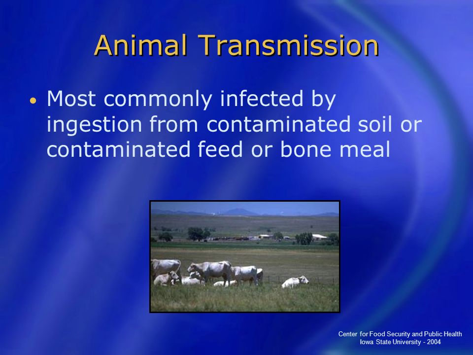 Center for Food Security and Public Health Iowa State University - 2004 Animal Transmission Most commonly infected by ingestion from contaminated soil