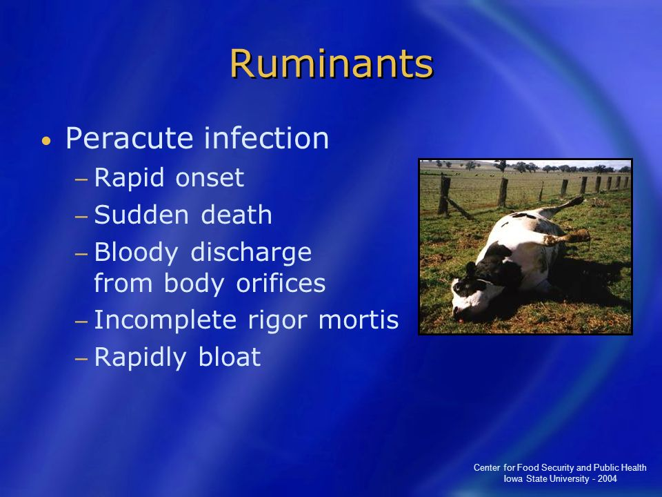 Center for Food Security and Public Health Iowa State University - 2004 Ruminants Peracute infection Rapid onset Sudden death Bloody discharge from bo