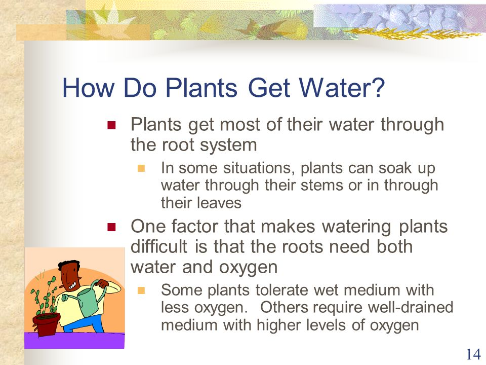 14 How Do Plants Get Water? Plants get most of their water through the root system In some situations, plants can soak up water through their stems or