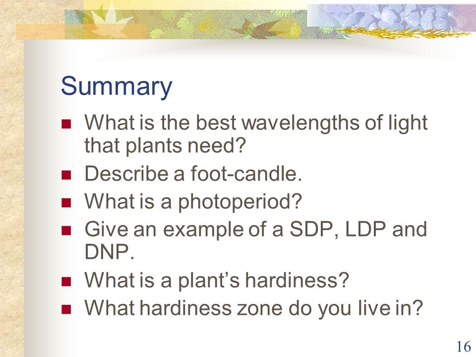 16 Summary What is the best wavelengths of light that plants need? Describe a foot-candle. What is a photoperiod? Give an example of a SDP, LDP and DN