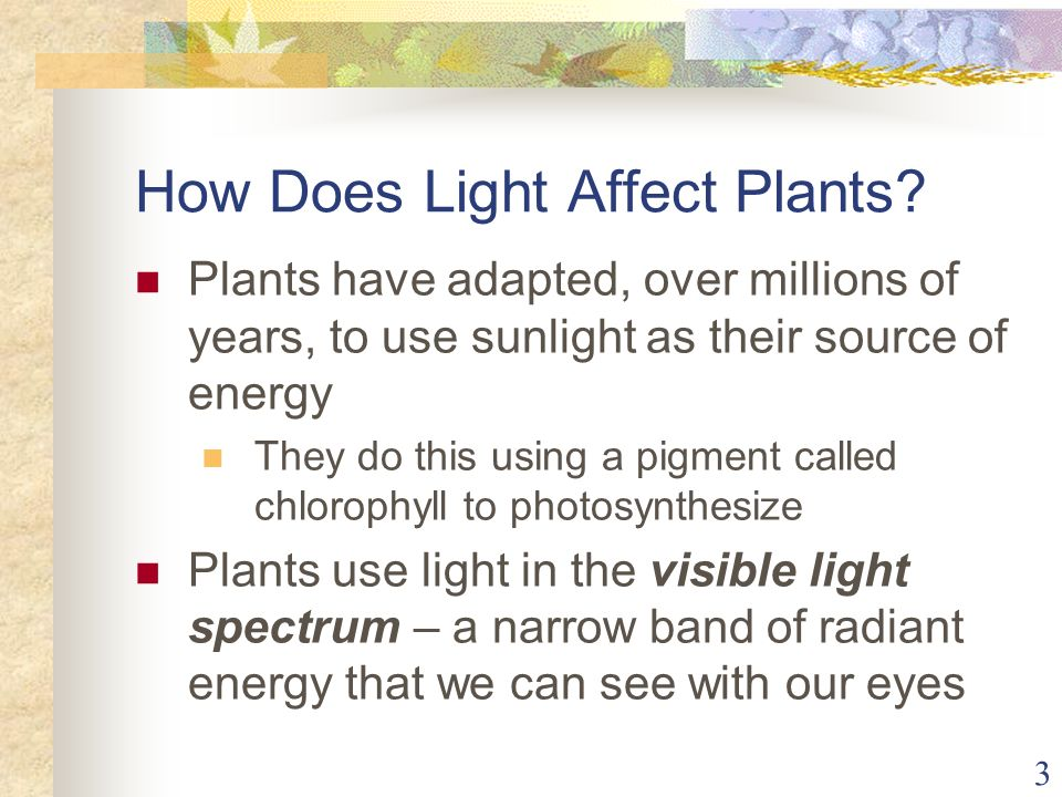3 How Does Light Affect Plants? Plants have adapted, over millions of years, to use sunlight as their source of energy They do this using a pigment ca