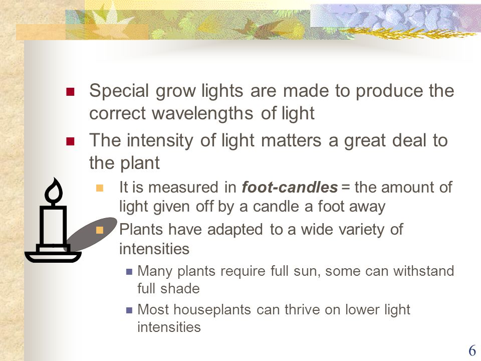 6 Special grow lights are made to produce the correct wavelengths of light The intensity of light matters a great deal to the plant It is measured in