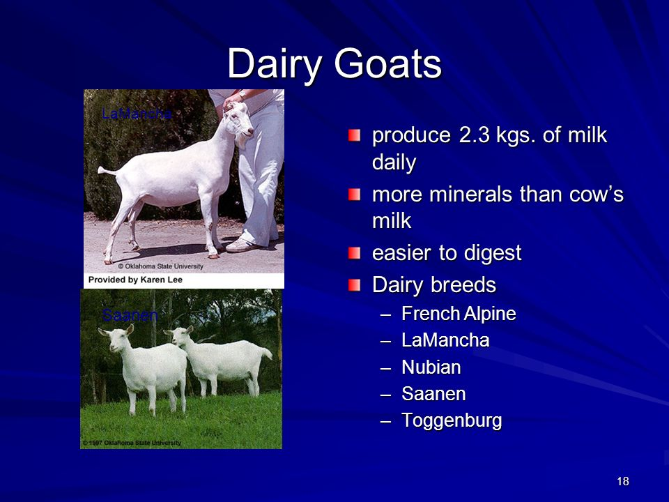 18 Dairy Goats produce 2.3 kgs. of milk daily more minerals than cows milk easier to digest Dairy breeds –French Alpine –LaMancha –Nubian –Saanen –Tog