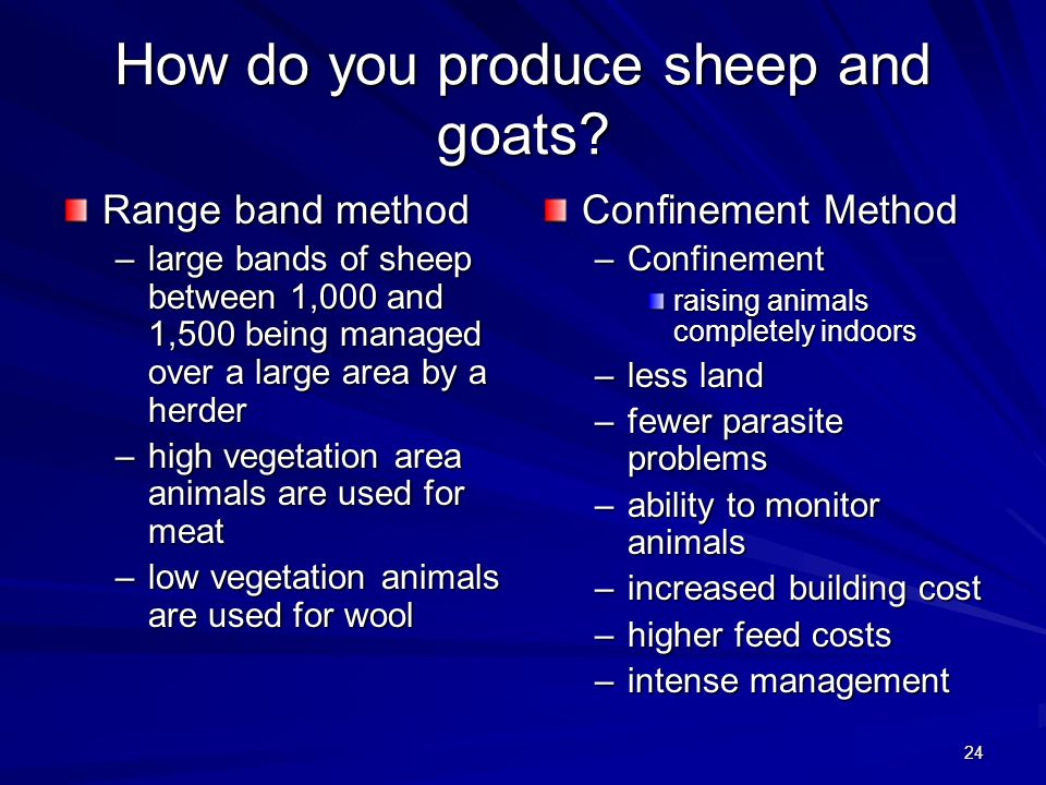 24 How do you produce sheep and goats? Range band method –large bands of sheep between 1,000 and 1,500 being managed over a large area by a herder –hi