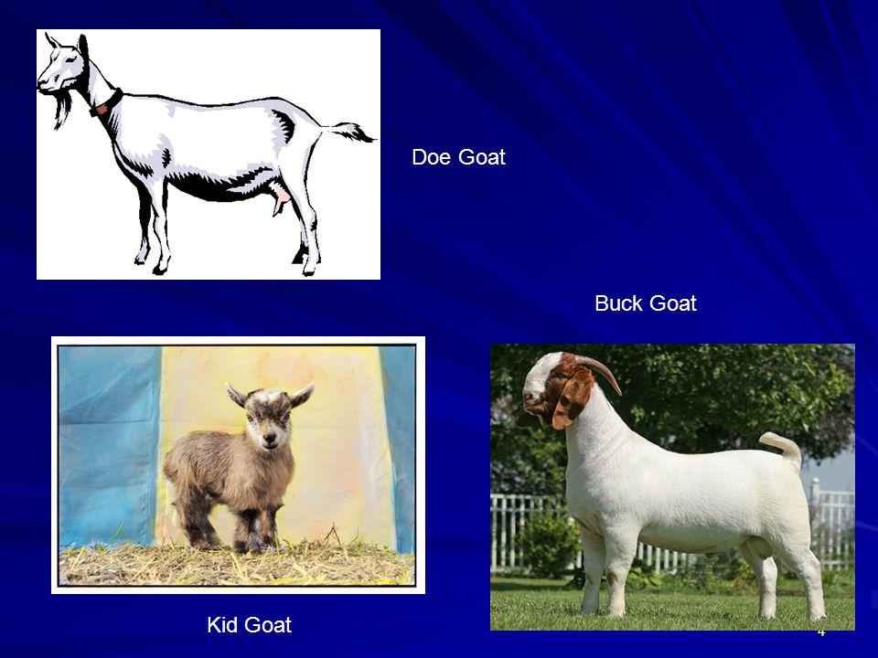 4 Kid Goat Buck Goat Doe Goat