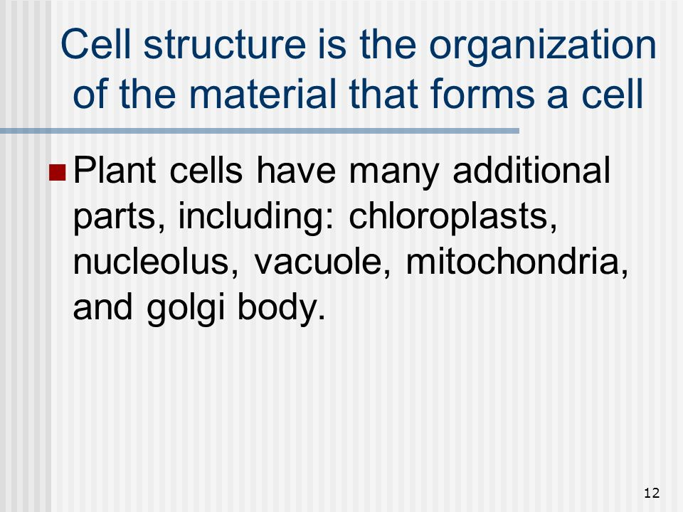 12 Cell structure is the organization of the material that forms a cell Plant cells have many additional parts, including: chloroplasts, nucleolus, va