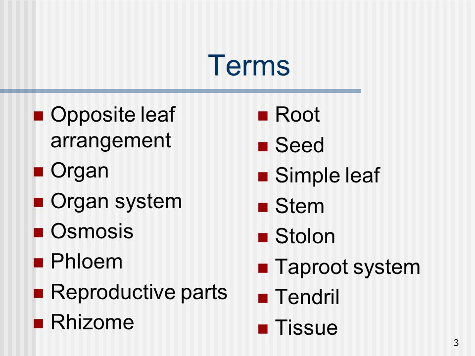 3 Terms Opposite leaf arrangement Organ Organ system Osmosis Phloem Reproductive parts Rhizome Root Seed Simple leaf Stem Stolon Taproot system Tendri