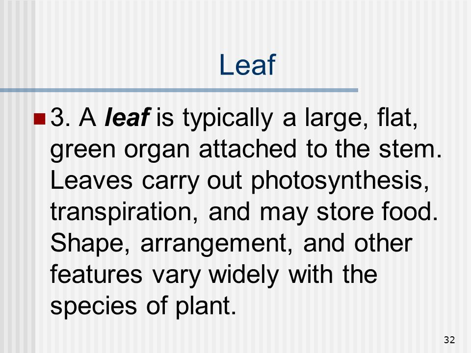 32 Leaf 3. A leaf is typically a large, flat, green organ attached to the stem. Leaves carry out photosynthesis, transpiration, and may store food. Sh
