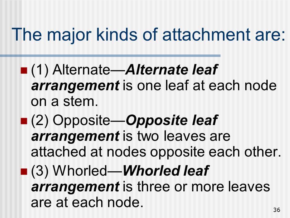 36 The major kinds of attachment are: (1) AlternateAlternate leaf arrangement is one leaf at each node on a stem. (2) OppositeOpposite leaf arrangemen