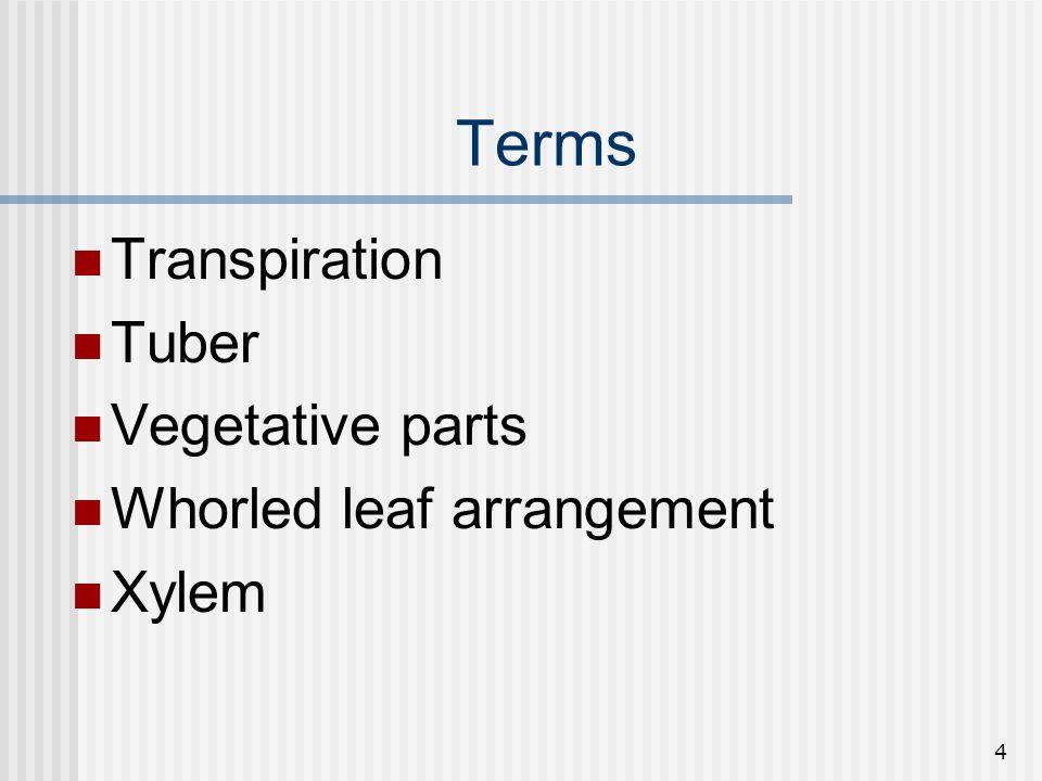 4 Terms Transpiration Tuber Vegetative parts Whorled leaf arrangement Xylem