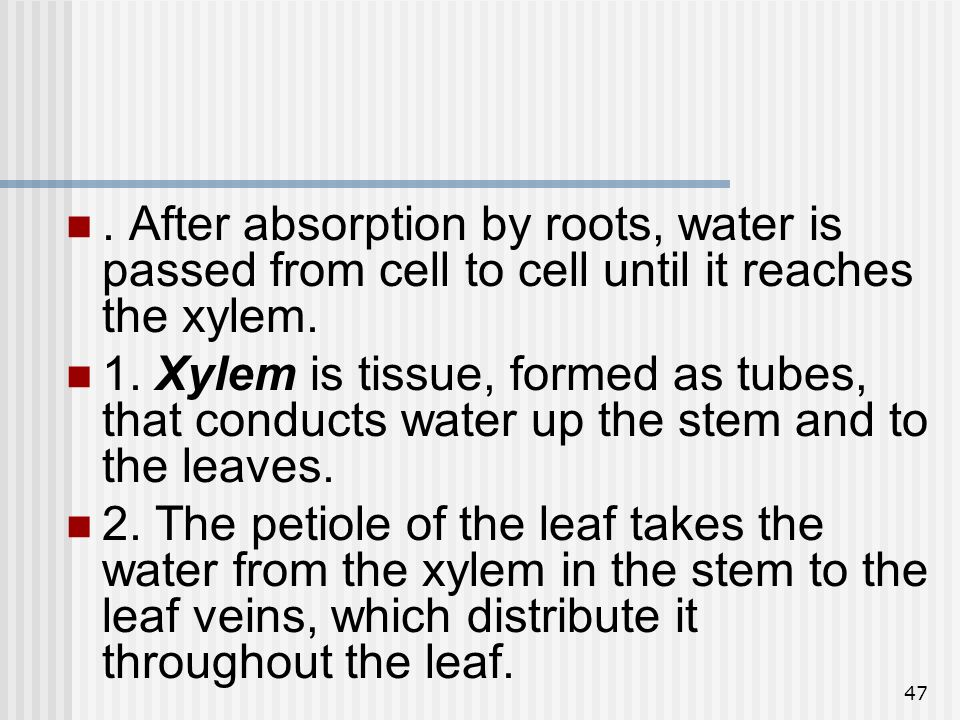 47. After absorption by roots, water is passed from cell to cell until it reaches the xylem. 1. Xylem is tissue, formed as tubes, that conducts water