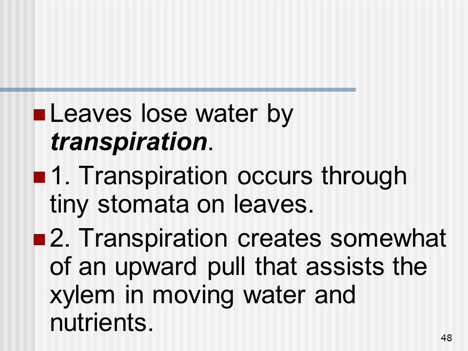 48 Leaves lose water by transpiration. 1. Transpiration occurs through tiny stomata on leaves. 2. Transpiration creates somewhat of an upward pull tha