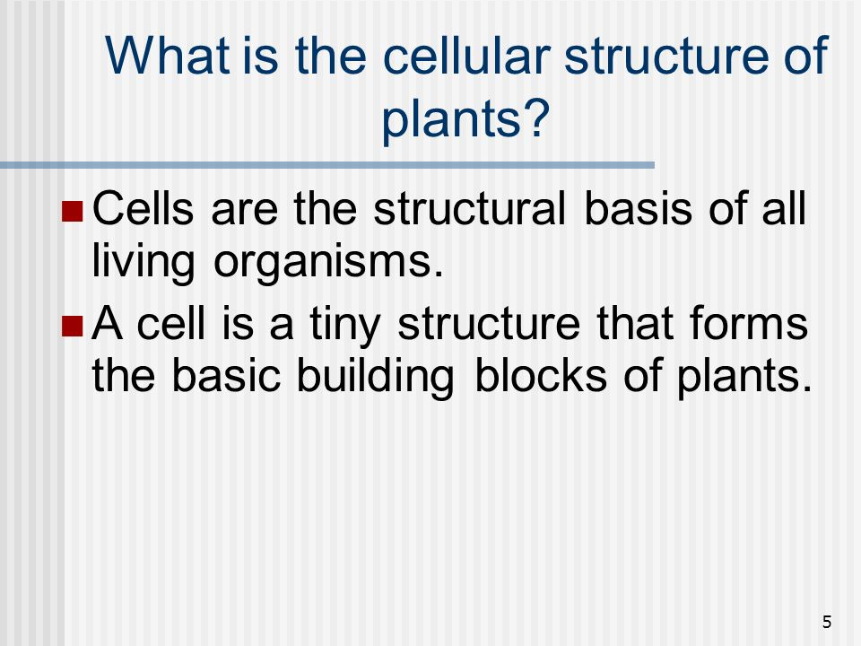 5 What is the cellular structure of plants? Cells are the structural basis of all living organisms. A cell is a tiny structure that forms the basic bu