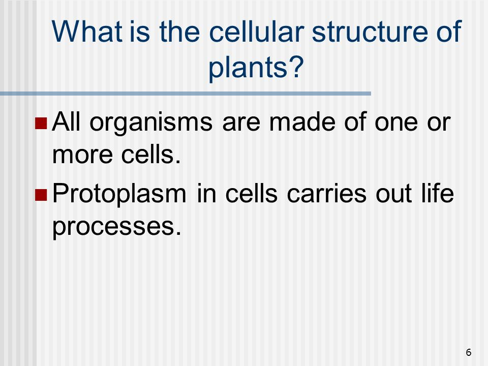 6 What is the cellular structure of plants? All organisms are made of one or more cells. Protoplasm in cells carries out life processes.