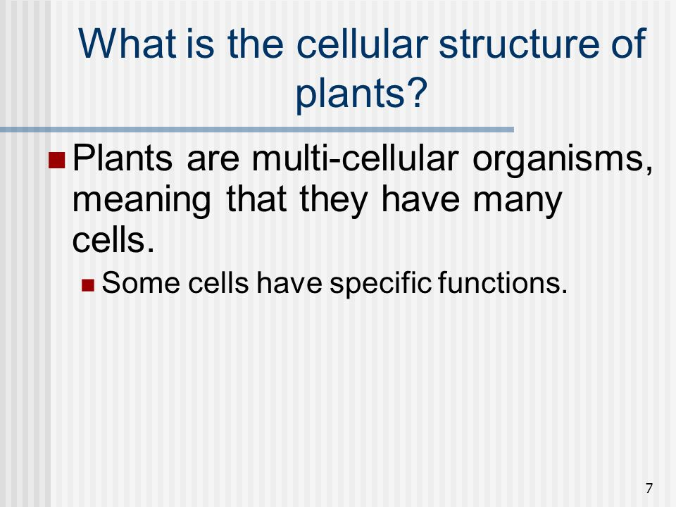 7 What is the cellular structure of plants? Plants are multi-cellular organisms, meaning that they have many cells. Some cells have specific functions