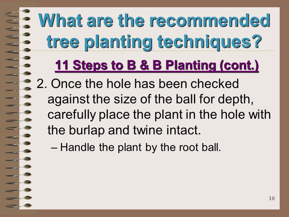 10 What are the recommended tree planting techniques? 11 Steps to B & B Planting (cont.) 2. Once the hole has been checked against the size of the bal
