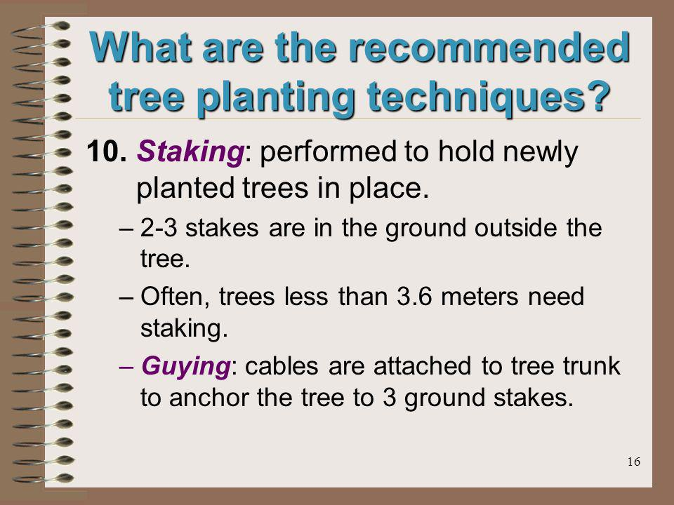 16 What are the recommended tree planting techniques? 10. Staking: performed to hold newly planted trees in place. –2-3 stakes are in the ground outsi